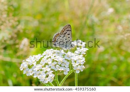butterfly, summer meadow (high key) - stock photo
