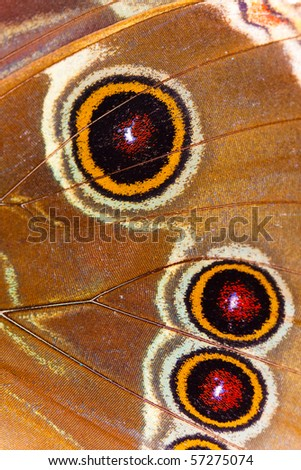 Butterfly Wing Close Up.
