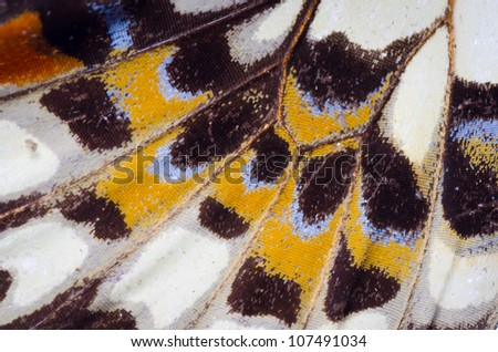 butterfly wing detail pattern texture background - stock photo