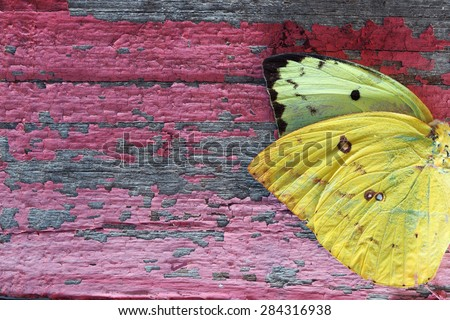 butterfly wing on grunge colorful wooden panel
