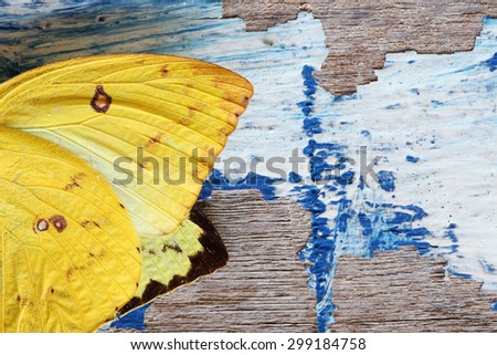 butterfly wing on grunge wall - stock photo