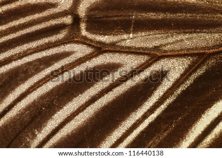 Butterfly wing patterns - stock photo