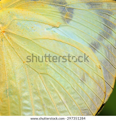 Butterfly wing texture yellow color - stock photo