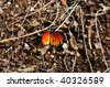 butterfly with a broken wing on the ground - stock photo