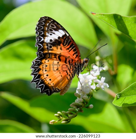 butterfly with flower on green foliage background