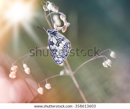 Butterfly with light and flowers,macro photography
