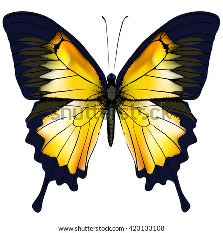 Butterfly. Yellow butterfly isolated illustration on white background. Nonexistent butterfly zoology specimen  - stock photo
