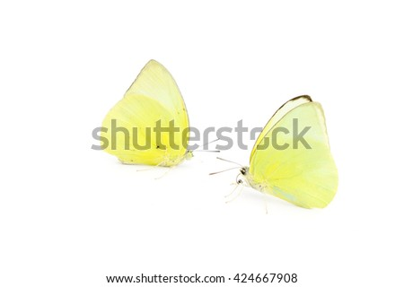Butterfly yellow color on white background - stock photo