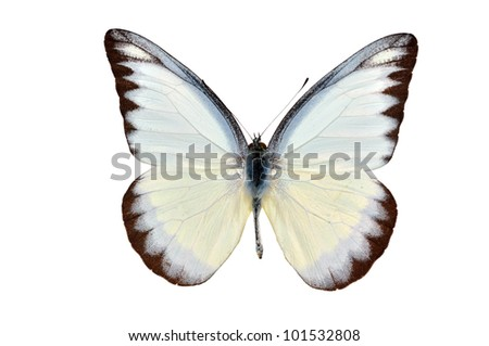 butterfly yellow spotted isolated on white background - stock photo