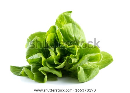 Butterhead hydroponic vegetable on white background