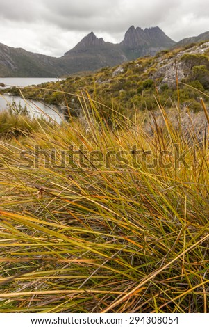 Buttongrass (Gymnoschoenus sphaerocephalus) at Lake St Clair National Park in Summer with Cradle Mountain background, Tasmania - stock photo