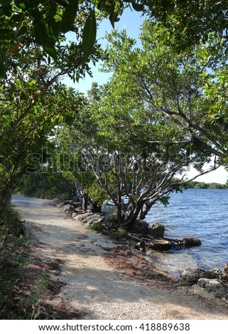 Buttonwood tree on a trail in Biscayne National Park in Florida. Biscayne National Park is for the most part under water and the largest underwater park in the United States.