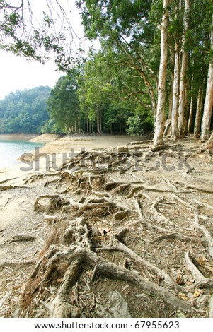 Large Tree Roots Stock Images, Royalty-Free Images & Vectors ...