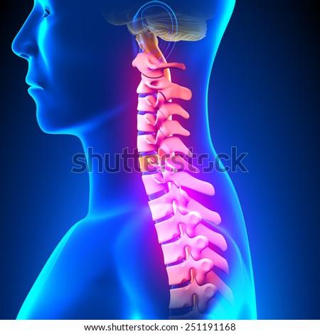 C6 Disc - Cervical Spine - stock photo