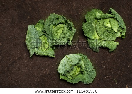 cabbage dirt background vegetable garden grow