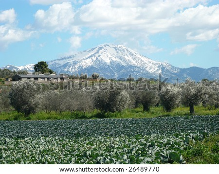 cabbage field with a snow capped mountain in the background on the island of evia in greece