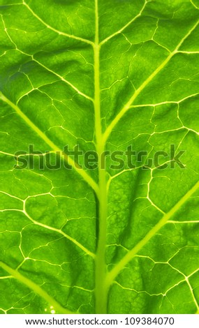 cabbage leaves - stock photo