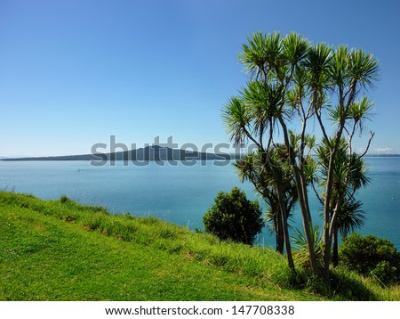 Cabbage palm tree in front of a seview with Rangitoto Island in the background - stock photo