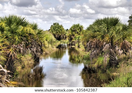 Cabbage Palms in central Florida / The Cabbage Palm
