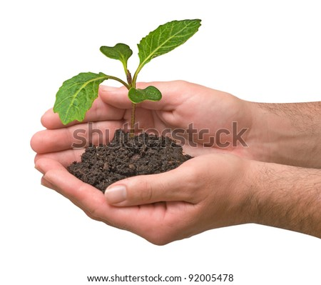 Cabbage sapling in hand - stock photo