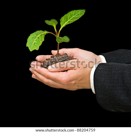 Cabbage seedling in hand - stock photo