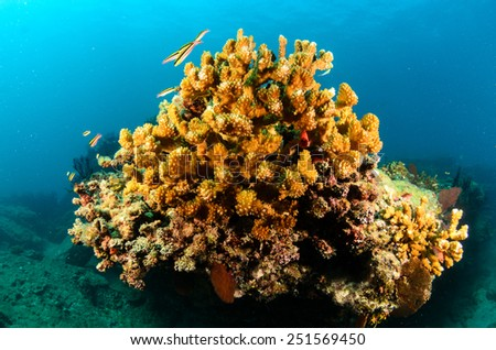 Cabo pulmo coral reef, sea of cortez, mexico  - stock photo