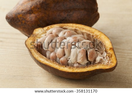 Cacao fruit and  raw cocao beans in the pod close up - stock photo