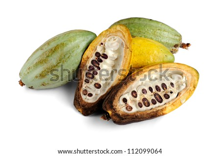 Cacao fruits isolated on white background, selective focus. - stock photo