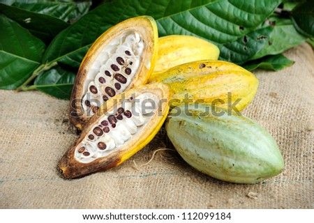 Cacao fruits on texture background, selective focus. - stock photo