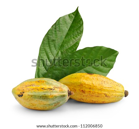 Cacao fruits with leaf isolated against white background, selective focus. - stock photo