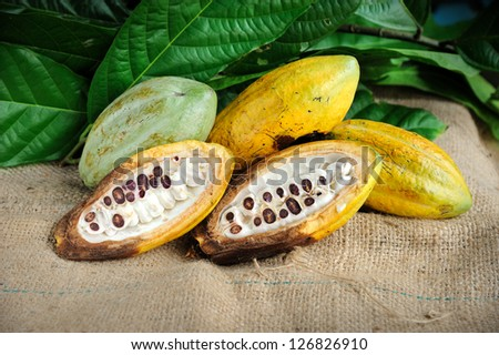 Cacao fruits with leaf, selective focus. - stock photo
