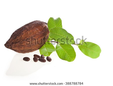 Cacao pod and beans with leaves isolated on white background