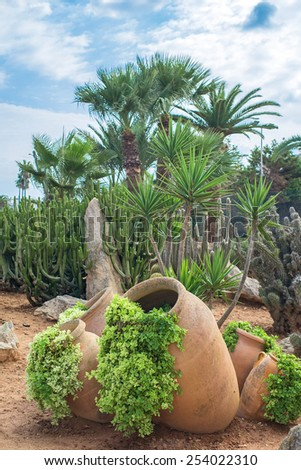Cacti and palm trees in the garden. - stock photo