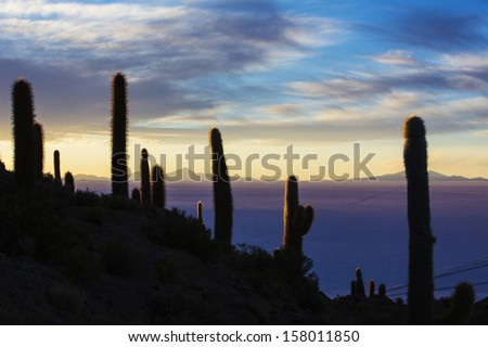 Cacti at Sunset