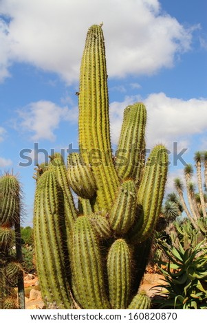Cactus, - stock photo