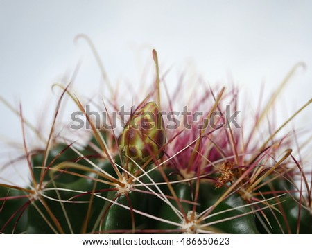 cactus and flower bud on white background