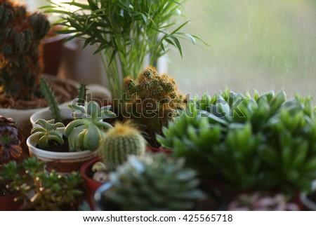 Cactus and succulent - stock photo