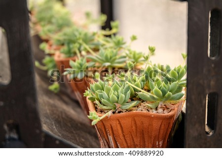 cactus and succulent in plot, in the nursery plant. - stock photo
