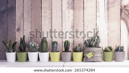 Cactus and succulents collection in small flowerpots. The rustic interior. With retro filter effect - stock photo