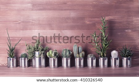Cactus and succulents on a wooden background. Recycle aluminum can. Retro filter effect - stock photo