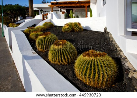 cactus bush  rock stone sky in arrecife lanzarote spain