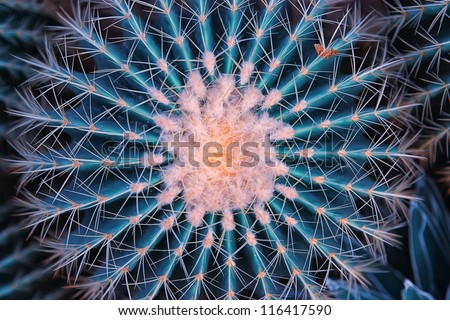 cactus close up - stock photo