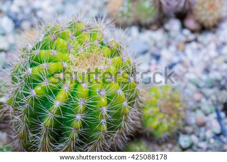 Cactus Close up of globe shaped cactus with long thorns. cactus in desert. - stock photo