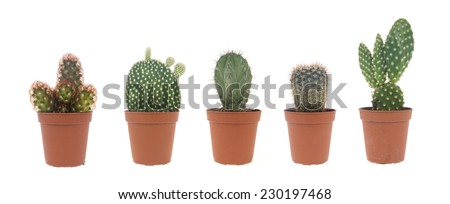cactus collection - stock photo