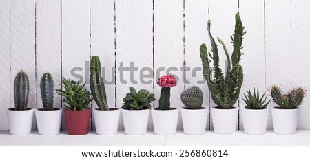 Cactus collection. Aloe and succulents on a white wooden background. With retro filter effect  - stock photo