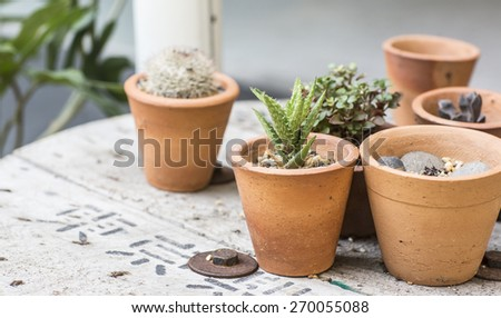 cactus decor - stock photo