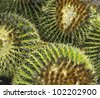 cactus  - detail - stock photo