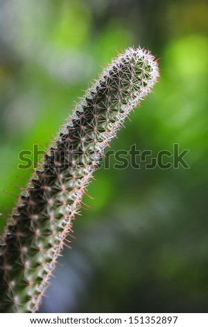 cactus details; shallow depth of field