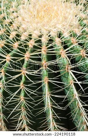 Cactus, extreme close-up - stock photo
