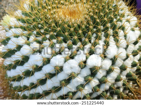 Cactus, extreme close-up - stock photo